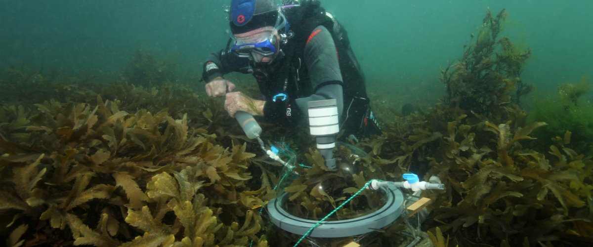Call for postdoctoral position in marine ecology | Station