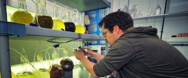 Culture de microalgues