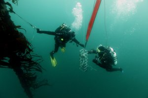 Intervention en plongée sur l'instrumentation de la bouée Astan